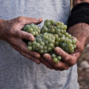 סיור כרמים וטעימות יין בעמק האלה