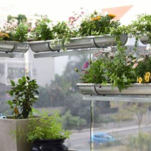 סדנה דיגיטלית לעיצוב הגינה הביתית