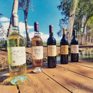 ביקור וטעימות יין ביקב גליליאו