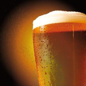 סדנת טעימות בירה בעלטה מוחלטת
